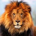 Lion-013-2048x2048